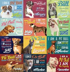 Change of Heart Pitbull Rescue Calendar -- You know you want one!