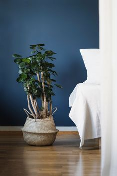 This rooms color concept (denim, cream & green) was the starting point of my plant love. Now I have around 50 happy plants and a little hydroponic garden in the kitchen. 🌿= Polyscias Fabian #nordic #scandinavian #guestroom #plants #hygge