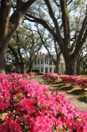 Bragg-Mitchell Antebellum Mansion ... Mobile, Alabama, the Azalea City.