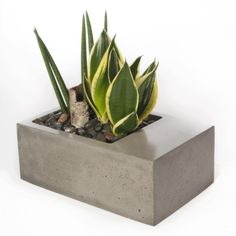 Modern Concrete Planters by Kevin Wood - Design Milk Cement Art, Cement Planters, Concrete Pots, Concrete Crafts, Modern Planters, Concrete Projects, Garden Modern, Beton Design, Concrete Design