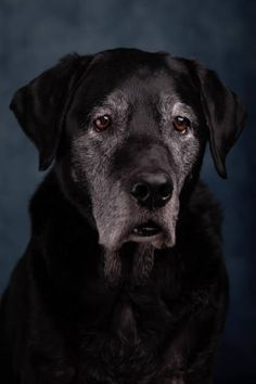 Solution, Aide, Dog Pictures, Labrador Retriever, Dogs, Ageing, Puppies, Plant, Animaux