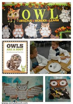 BLOG - Informational Text is a Hoot : An Owl Informational Text & Shared Research CCSS Unit