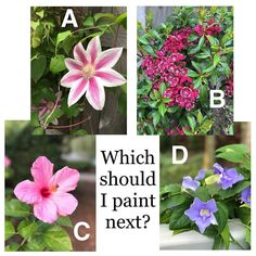 I want to do a couple more like I did my hydrangeas. Help me decide which one to start next!  #cantdecide  #paintedflowers  #helpmepick
