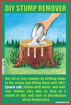 DIY Tree Stump Removal -drill holes in stump, fill with epsom salt then add water Outdoor Projects, Garden Projects, Stump Removal, Plantation, Dream Garden, Lawn And Garden, Garden Inspiration, The Great Outdoors, Good To Know