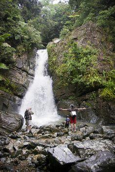 El Yunque Rainforest, Puerto Rico #puertorico #travel