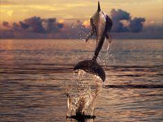 Wasserspaß mit Delfinen