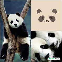 Lovely Panda Panda Bear, Deco, Animals, Animaux, Deko, Pandas, Decorating, Animal, Dekoration