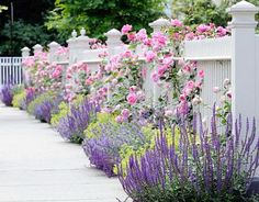 Lavender: This Favorite Scent Is Also A Hearty Plant That Can Add Color and Fragrance To Your #Garden With Minimal Upkeep. -BestGarden.net