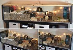 Just some detolf inspiration Syrian Hamster Cages, Hamster Bin Cage, Cool Hamster Cages, Robo Hamster, Gerbil Cages, Hamster Life, Hamster Habitat, Hampster Cage, Diy Hamster Toys