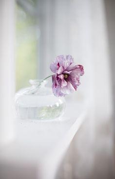 Little Flowers, My Flower, Flower Art, Flower Power, Beautiful Flowers, Cute Pineapple Wallpaper, Shades Of Violet, Shabby Flowers, Purple Lilac