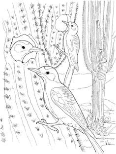 Cactus Wren Nest in Saguaro Coloring page