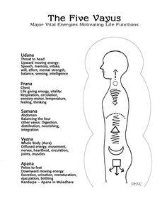 vayus | subtle energy currents (nadis),                                                                                                                                                                                 More