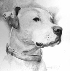 Ryan D. Dog Portraits, Wildlife, Puppies, This Or That Questions, Cat Art, Graphite, Drawings, Drawing Ideas, Dogs