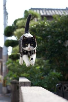 A black and white cat jumping from one cement block to another.