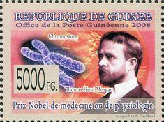 Prix Nobel, Nobel Prize Winners, Ms Gs, Famous People, Baseball Cards, History, Images, Biologist, Google