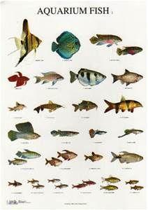 Listing names of aquarium fish in alphabetical order for Names for pet fish