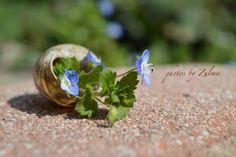 **Photos by Zulma**, photo taken in Pordenone, Italy