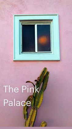 Pink Palace, Succulents In Containers, Frame, Gardens, Beautiful, Home Decor, Picture Frame, Decoration Home, Room Decor