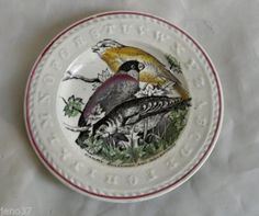 Outstanding-Antique-Staffordshire-ABC-Plate-Canary-Bullfinch-Goldfinch-Birds