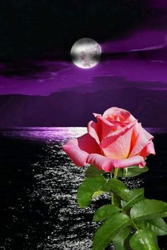 By Artist Unknown. Cross Pictures, Moon Pictures, Pretty Pictures, Romantic Flowers, Amazing Flowers, Beautiful Moon, Beautiful Roses, Blue Roses, White Roses