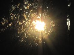 Light, Shining The sun's rays gives out a bright light through the tree branches.
