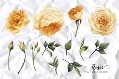 Yellow flowers by ollalya on @creativemarket