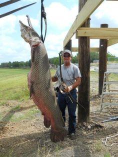 Alligator Gar Pictures