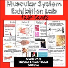 Muscular System Exhibition Lab TASK CARD style. A great activity to add to your body systems unit! Kids love these!
