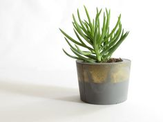 Concrete planter with metallic gold spray paint accent, perfect for succulents and cacti.  Measures approximately 2.5 inches tall and 4 inches wide.