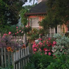 "outdoormagic: "" Flower Carpet roses in cottage garden by tesselaarusa """