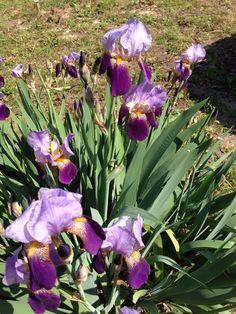 公園の花壇 The flower bed of a park