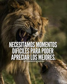 ___No Copyright infringement intended Image Unknown. For credits / Respect to Photographers & Influencers Jiu Jitsu Frases, Lion Quotes, Copyright Infringement, Lions, Respect, Good Things, Motivation, Words, Image