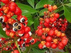 Resultado de imagem para plantas medicinales