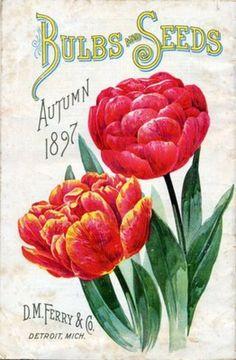 vintage seed pack 1897