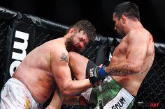 UFC Fabricio Werdum vs Roy Nelson