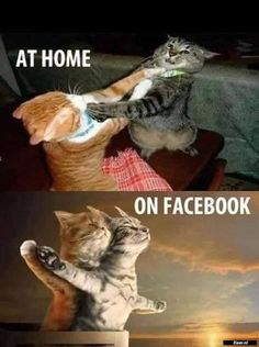 Cat Lovers Community - Your Daily Source of Cat Stories and Funny Cat Memes Funny Animal Jokes, Crazy Funny Memes, Really Funny Memes, Stupid Funny Memes, Cute Funny Animals, Funny Relatable Memes, Puns Hilarious, Cute Cat Memes, Funny Cute Cats