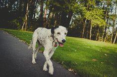 {Lucky} 119 dog years by www.MegganJoyPHOTO.com