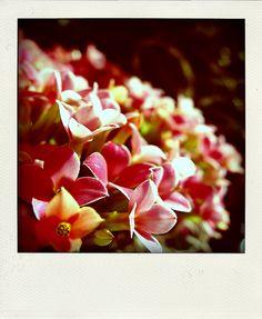 flowers. polaroid.