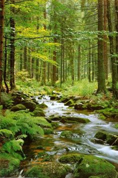 Inspiration for a woodland or moss garden.