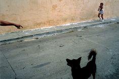 by David Alan Harvey / Street scene, Trinidad, Cuba, 1998 Color Photography, Street Photography, Photography Composition, Composition Art, Animal Photography, Travel Photography, David Alan Harvey, Alex Webb, Photographer Portfolio