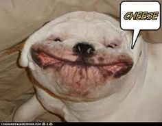 happydogs - Google Search