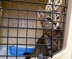 Traveling with pets? Tips and helpful info from the Humane Society of the United States.