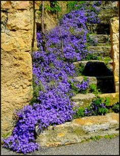 blue flowers on stone steps