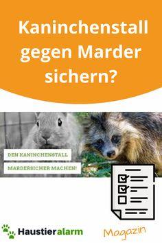 """Kaninchenstall gegen Marder sichern – """"So einfach geht's! Movies, Movie Posters, Art, Animales, Simple, Art Background, Films, Film Poster, Kunst"""
