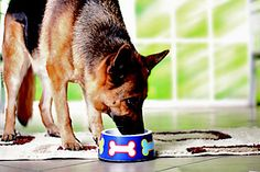Senior dog nutrition to prevent glaucoma, dementia and other issues