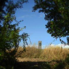 Svendemose Bakke #beautiful #outdoor #nature #landscape #bestofscandinavia #worldunion #wu_europe #igers #igdaily #igscandinavia #danmark #nofilter #vsco #vscocam #picoftheday #photooftheday #instagood #instamood #instadaily #assens #assensnatur #visitassens #visitdenmark #instapic #instagram #friluftsliv #fynerfin #vildmedfyn #mitassens