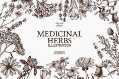 Medicinal herbs sketch set by Yevheniia on @creativemarket