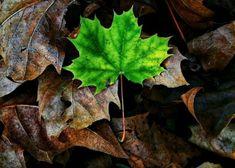 Paper Trees, Plant Leaves, Plants, Flora, Plant
