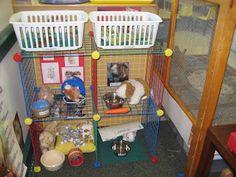 Pet store    eat.run.play: Preschool greatness