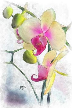 Watercolor Paintings of Orchids | flowing orchids painting flowing orchids fine art print